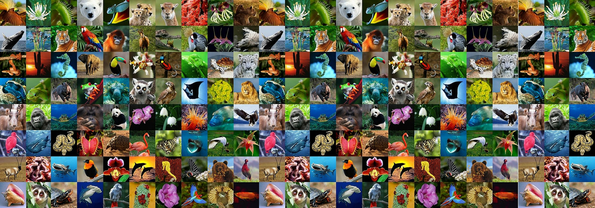 Join the UN campaign to help end wildlife crime on World Wildlife Day