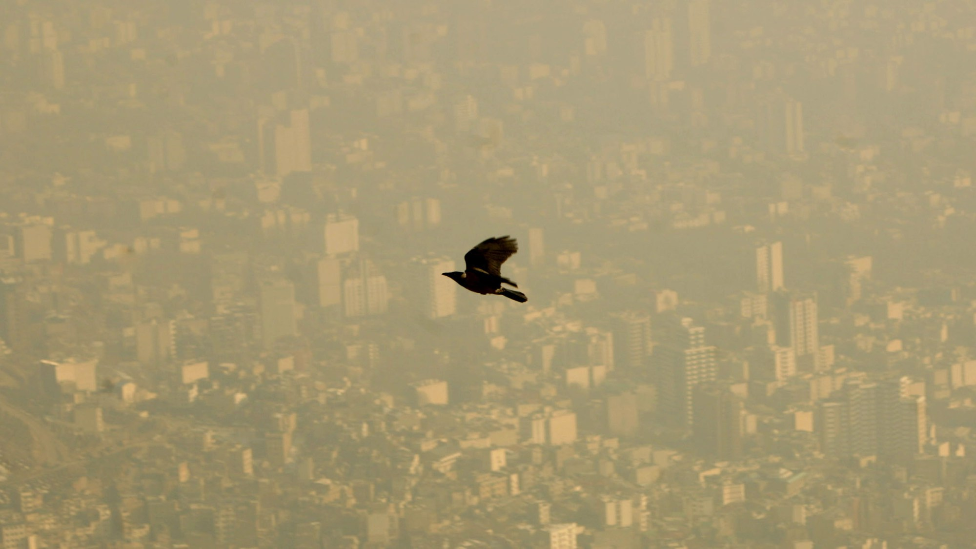 JOIN the e-discussion on Cities, Pollution, Health, Nexus