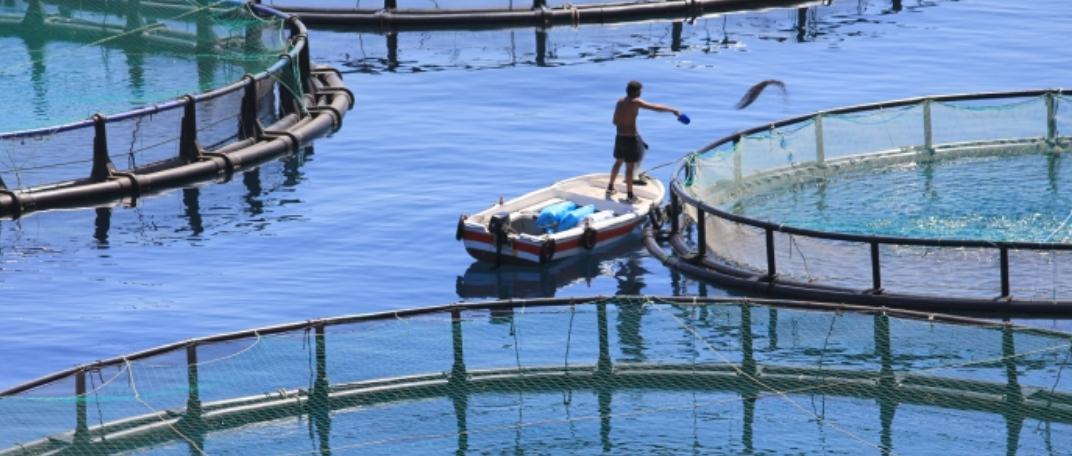 Sustainable Tuna Fish Farms