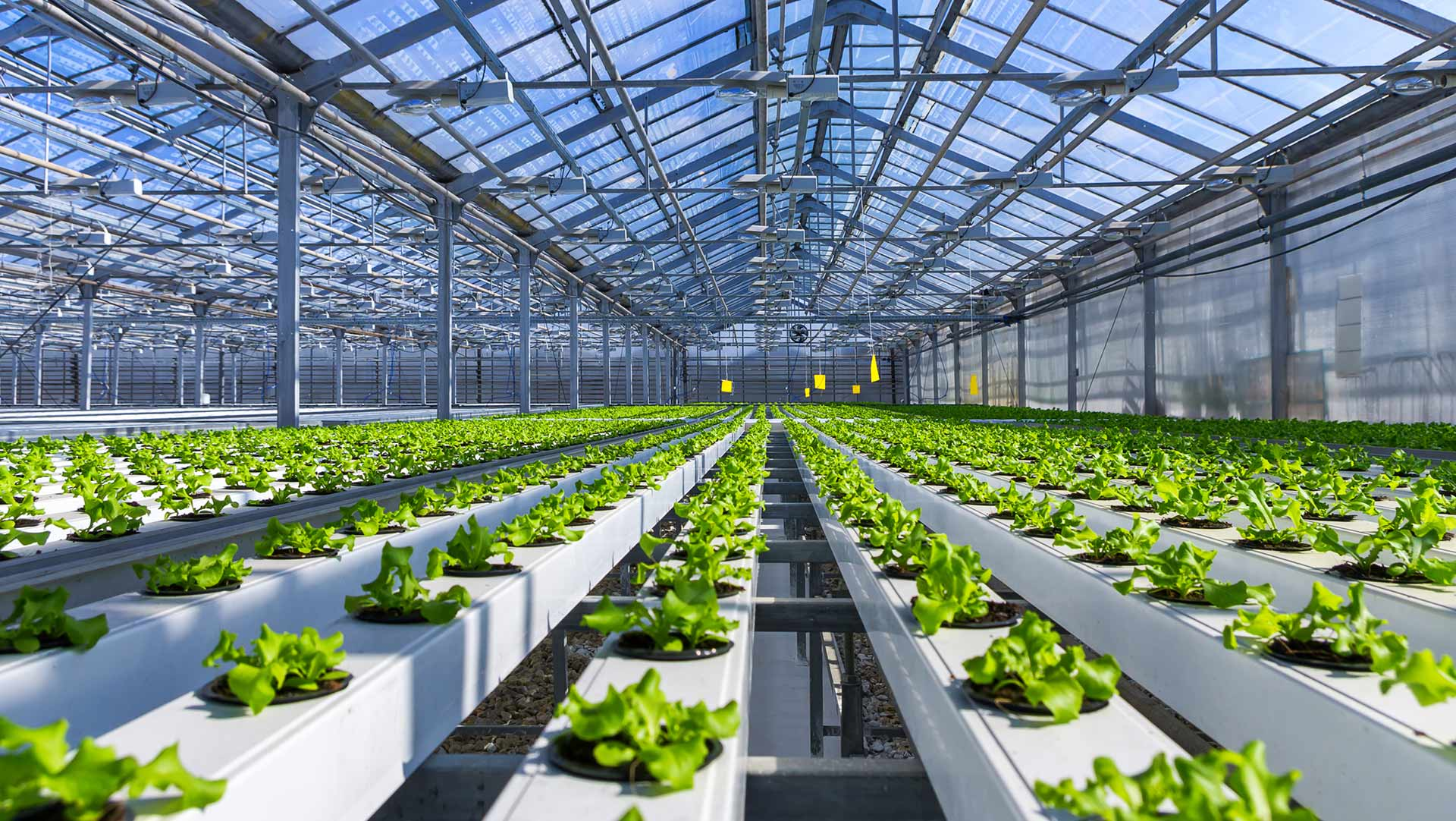 Sustainable Farming Continued…